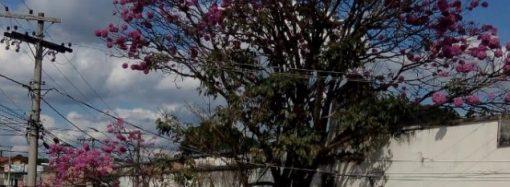 Marco da industrialização de SL, fábrica de tecidos vai fechar de vez suas portas