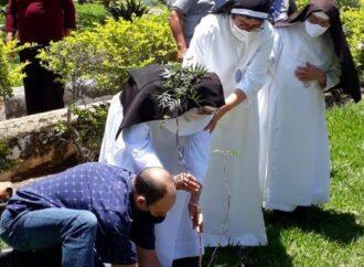 No dia de finados, irmãs dão exemplo e plantam árvore no Mosteiro de Macaúbas